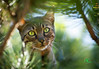 Flashy (Andreas Krappweis - thanks for 3 million views!) Tags: tree cat fun bengalcat tamronspaf300mmf28ldif sonyalpha850