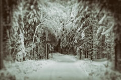 Vanha talvitie / Old Winter Road (Tuomo Lindfors) Tags: talvi winter kuopio suomi finland tie road niksoftware analogefexpro theacademytreealley tamronsp70200f28divcusd