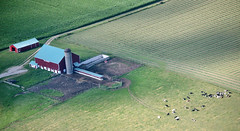 Cows From Above (peterkelly) Tags: ontario canada field barn digital rural airplane cattle cows farm guelph silo pasture crop northamerica aerialphotography aerialphotos