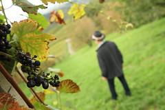 Unterwegs im Weinberg (rocketfall) Tags: autumn fall vineyard october wine herbst hut mann schwarzwald gerhard wein weinberg trauben 2014 blackforrest backforrest sasbachwalden okober altergott nordschwarzwald