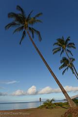 Palm Trees (MissTessmacher) Tags: tree beach hawaii nikon maui shore palmtree 2470f28 d810