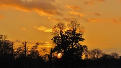 At the going down of the sun (Green_blade) Tags: trees sunset orange sun silhouette justclouds burntamber