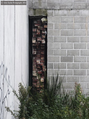 In Hiding (Steve Taylor (Photography)) Tags: city newzealand christchurch white building brick green broken wall grey graffiti weeds tag canterbury nz southisland cbd enclosed