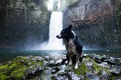 Abiqua Falls, Oregon (Justin Knott) Tags: dogs oregon waterfall nikon hiking dogdaddy nikond600 abiquafalls rokinon24mm