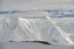 Dorian Bay (ccaggi) Tags: mountain penguin gentoo antarctica aq dorianbay