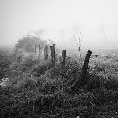 Carré de pré dans le brouillard (steph20_2) Tags: winter white monochrome lumix countryside noir noiretblanc hiver ngc panasonic g5 20mm prairie monochrom campagne brouillard brume picardie clôture pré oise m43 skanchelli