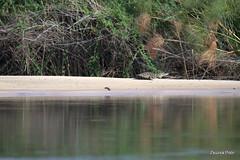 Okavango, Drotsky's Cabin, Shakawe (Zsuzsa Por) Tags: africa nature animal wildlife safari botswana moremi animalplanet okavango okavangodelta wildlifeafrica canonef2470mmf28 canonistas canoneos7d canonef70200mmf28lisusmii