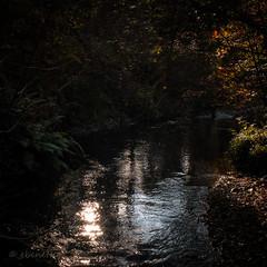 Reflection (ebenette) Tags: leica photography walk devon m8 dartmoor manaton ebenette