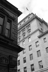 seagull canyon (Towner Images) Tags: seagull gull flight soar bird liverpool city canyon buildings townerimages towner bw monochrome monochromatic copyright mono merseyside greyscale rowse martinsbank