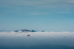 Peekaboo (morozgrafix) Tags: sanfrancisco california blue sky fog unitedstates goldengatebridge goldengate marinheadlands