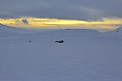 Lonley hut (janfredrik.helgaker) Tags: winter mountains norway skiing hut