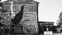 rve...... (peu prsente...ailleurs !) Tags: noiretblanc tag graff larochelle oiseaux rve nuitdebout