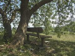 relax (conteluigi66) Tags: foglie relax ombra natura erba terra albero prato paesaggio rami panchina calmo fronde naturale fronda rilassante ombreggiatura ombreggiato luigiconte