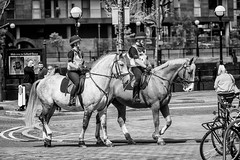 The Royal Salfordian Mounted... (pvizdal_photo) Tags: horses police salfordquays streetphoto