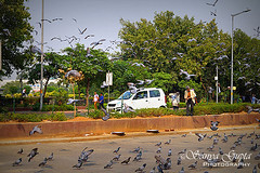 connaught place (CITY LIFE) (sanyagupta09) Tags: new travel india beautiful birds niceshot delhi exploring explore cp discover photooftheday bestshot travelphotography sonyalpha