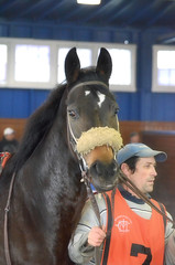 2016-01-08 (12) r1 #4 Northern Prancer (JLeeFleenor) Tags: horses sports sport caballo cheval photography bay md photos uma maryland cal cavallo cavalo pferd equestrian kuda alogo equine hest thoroughbreds soos hevonen cuddy paard paddock cavall kon koin laurelpark  hst ceffyl   ko faras hestur  perd  konj    capall beygir yarraman pfeerd marylandhorseracing marylandracing