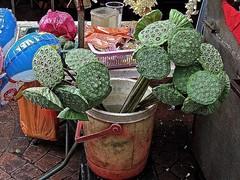 Nelumbo nucifera 2 (heinvanwinkel) Tags: malaysia kualalumpur juli 2009 nelumbonaceae magnoliophyta nelumbonucifera proteales spermatophyta tracheophyta eudicotyledons euphyllophyta mesangiospermae heiligelotus bloemvandedag stemeudicotyledons