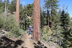 0121 Vicki smelling the vanilla-scented bark of a large Jeffrey Pine (_JFR_) Tags: camping hiking backpacking pacificcresttrail pct bigbear sanbernardinonationalforest