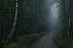 Hide and Seek (MilaMai) Tags: road morning trees light summer mist tree green nature leaves fog forest suomi finland way landscape outdoors dawn countryside solitude alone path walk foggy mysterious birch wilderness curve atmospheric mystic shiningthrough maisema mntyharju milamai maijuleena
