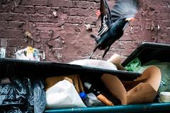 La Gazza Ladra e La Pizza (clif_burns) Tags: trash washingtondc pizza dumpsters crows magpies ravens alleys ustreet
