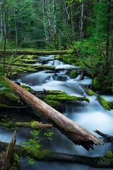 Forest Falls (jpeder55) Tags: green nature water landscape spring mthood fujifilm wilderness watermotion littlezigzag jpedersenphotography