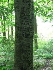 Beech Tree (Picsnapper1212) Tags: plant tree nature bark vandalism carvings beech abuse initials americanbeech