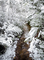 Paul Brandon Overland 2016 (16 of 140) (Paul Brandon  Rambling House Photography) Tags: mountain snow mountains walking nikon rainforest hiking australia tasmania cradle iphone