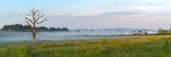 Summer Mist (jactoll) Tags: light summer mist misty zeiss landscape dawn sony cotswolds gloucestershire stowonthewold 70200mmf4 a7ii dawnmist jactoll