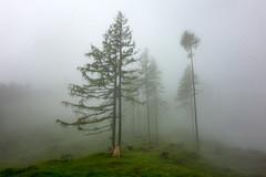 klingspitz (bernd.kranabetter) Tags: am sommer natur regen hochknig dienten sonydscrx100