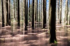 Dreamy forest (Joakim Billebo) Tags: longexposure trees forest sweden kortedala