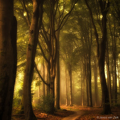 To the light ( Jenco van Zalk) Tags: track rail magical fairytale sunlight beech netherlands holland leefilters lee nikon