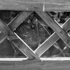 Lighted spider web (schauplatz) Tags: neidlingen schwbischealb wanderung schwarzweis blackandwhite blackwhite schwarzweiss monochrome swabianalb spinnennetz spiderweb gegenlicht zaun fence wood holz
