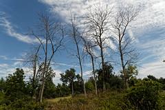 Trees, bare (joeldinda) Tags: tawaspointstatepark tree tawascity michigan city 3235 august bird 2016 underbrush sky cloud