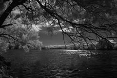 Am Fluss (ktmdriver74) Tags: infrarot fluss aare grenchen sony a100 hoya r72