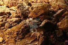 Grotte di Stiffe_41