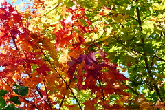 Colors on a sunny day (evisdotter) Tags: colors frger autumnleaves hstlv light nature sooc lnnlv
