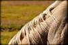 500_1963-2 (DianeBerky19) Tags: 2016 jacksonholewyoming summitnatureworkshop wy nikond500 horse mane