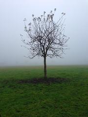 Herbst Harvest Autumn (Hellebardius) Tags: november autumn tree misty fog nebel herbst harvest depression baum appletree