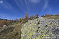 Paesaggio alpino, mountain landscape (paolo.gislimberti) Tags: autumn trees alberi rocks rocce autunno lichens larches conifers mountainlandscape licheni conifere autumnalcolors larici ceresolereale coloriautunnali paesaggiodimontagna alpineenvironment alpinegrassland prateriaalpina ambientealpino