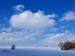 blauer himmel und wolken bei schnee (hlh 1960) Tags: schnee trees winter sky snow cold nature clouds germany landscape natur himmel wolken kalt landschaft büsche