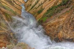 Yellowstone Lower Falls Leap (Philip Kuntz) Tags: waterfall yellowstonenationalpark wyoming yellowstoneriver lowerfallsoftheyellowstone yellowstoneriverlowerfalls overtheexcellence