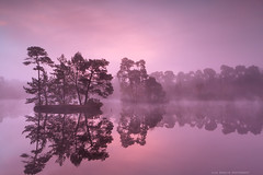 purple misty sunrise over wild lake in forest (Olha Rohulya) Tags: morning pink blue red wild sky mist lake holland reflection tree nature water netherlands beauty dutch silhouette misty fog forest sunrise landscape outside outdoors island countryside early pond scenery silent view purple scenic dramatic tranquility nobody nopeople calm reflect tranquil noordbrabant