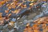 Autumn road (KronaPhoto) Tags: road street autumn tree colors norway mirror leaf tre vei høst blader speil farger gren kumlokk gatelangs