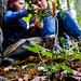 Symonds Yat, Forest of Dean, Royaume-Uni