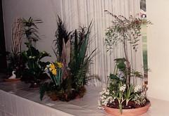 "SCAN_0090  Floral Art 1991 (aciamax) Tags: autumn winter summer modern spring opera freestyle european seasons foliage daffodils gerberas bullrushes proteas basketware ""gardenshow"" ""floralart"" ""weatheredwood"" basicmodern ""bridalbouquet ""boldandbeautiful"" ""dorothypaulplate"" ""driedarrangement"" ""freeexpression"" ""freeform"" ""flowerarrangement"" ""mychoice"" ""roseshow"" ""smallflowers"" ""songtitle"" ""twolevels"" ""emodin"" ""elainstenner"" ""elizabethmckemish"" ""iriscottrill"" ""jackclarke"" ""joynewell"" ""joycemcnamara"" ""margaretjames"" ""mariewarnecke"" ""maxbeach"" pervisdubash"
