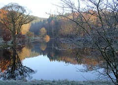 It was a hoarfrost night (:Linda:) Tags: reflection germany pond village hoarfrost thuringia baretree willowtree brden