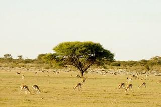 Botswana Hunting Safari 48