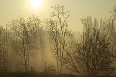 nebbia a Cusago (paolo.ferrero71) Tags: sunshine fog nebbia mattina cusago