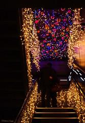 Tokyo Christmas (2) (DameBoudicca) Tags: christmas japan stairs weihnachten tokyo evening abend navidad couple pareja paar christmaslights treppe escalera  scala tokyotower nippon  date jul nol shiba soir natale japon luminaria giappone escalier   nihon par rendezvous cita sera coppia tokio lichterkette japn  trappa kvll     appuntamento  illuminationsdenol julbelysning