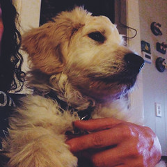 1/365 (moke076) Tags: portrait dog oneaday animal mobile self puppy mutt mixed holding furry hand designer cellphone cell blond cuddly photoaday 365 breed goldendoodle iphone selfie 2015 project365 365project vsco vscocam